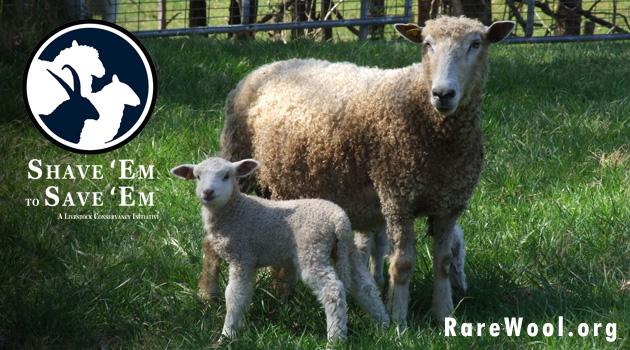 Shave Em to Save Em logo and sheep