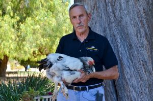 Dave Anderson with Brahma chicken