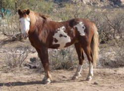 Wilbur Cruce Horse