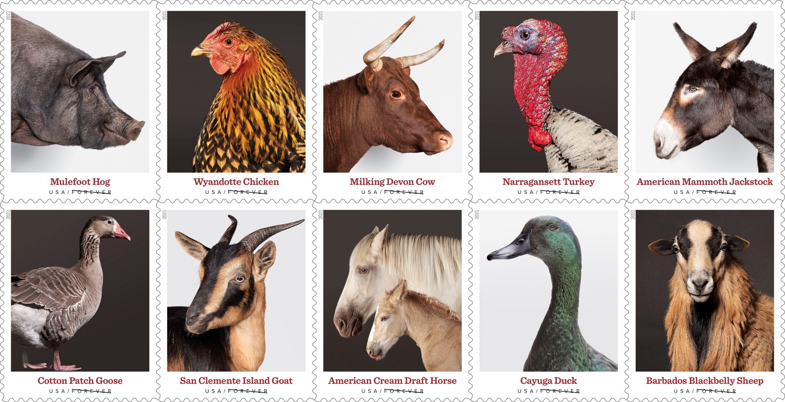 Heritage Breed Stamps