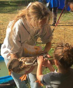 Chloe LaBelle holds a Silver Appleyard duck