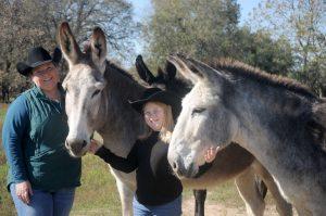 Megan Teel with American Mammoth Jackstock donkeys