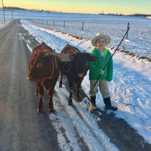 Josiah Freier with Milking Devon oxen team