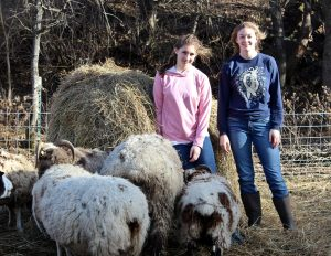 Kennedy sisters with their herd of Oxford and Jacob sheep