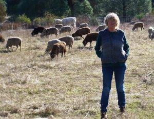 Lynn Moody in a field with her Santa Cruz sheep