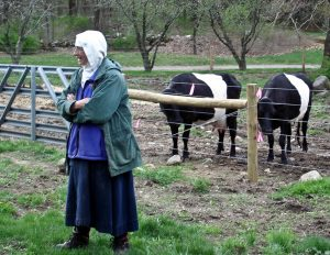 Sister Telchilde Hinckley with Dutch Belted cows