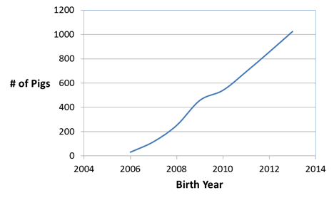 number of pigs vs birth year
