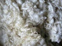 Southdown sheep fleece